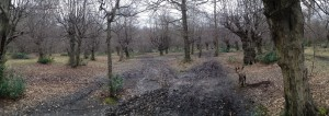 Epping Forest - Feb