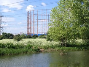 Tottenham Marshes - May
